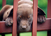 PUP 05 GR0217 01