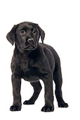 PUP 05 JE0002 01