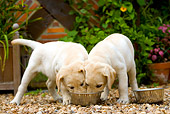 PUP 05 JE0013 01