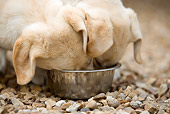 PUP 05 JE0014 01