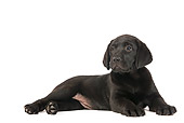 PUP 05 JE0021 01