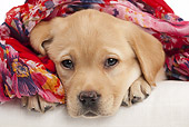 PUP 05 JE0026 01
