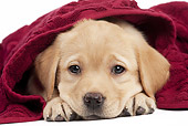 PUP 05 JE0027 01