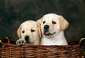 PUP 05 KH0003 01