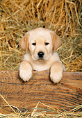 PUP 05 KH0004 01