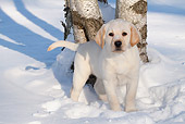 PUP 05 LS0015 01