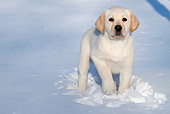 PUP 05 LS0016 01