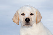 PUP 05 LS0017 01