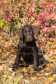 PUP 05 LS0019 01