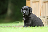 PUP 05 NR0026 01