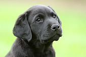 PUP 05 NR0027 01