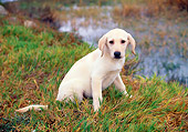 PUP 05 RK0024 01