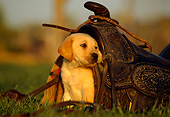 PUP 05 RK0046 06
