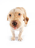PUP 05 RK0072 11