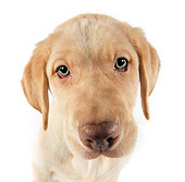PUP 05 RK0072 16