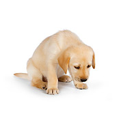 PUP 05 RK0093 01
