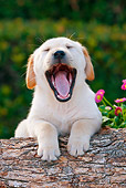 PUP 05 RK0094 01
