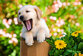 PUP 05 RK0096 01