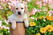 PUP 05 RK0097 01