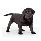 PUP 05 RK0099 01