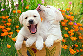 PUP 05 RK0105 01