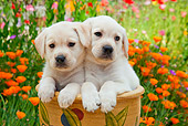 PUP 05 RK0106 01