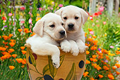 PUP 05 RK0107 01