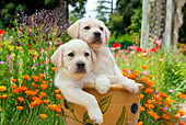PUP 05 RK0108 01