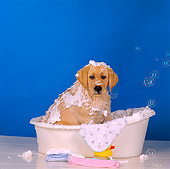 PUP 05 RS0012 05