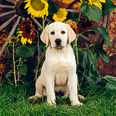 PUP 05 RS0020 01