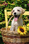 PUP 05 SJ0001 01