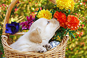 PUP 05 SJ0008 01