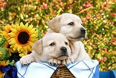 PUP 05 SJ0010 01