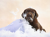 PUP 05 XA0002 01