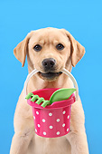 PUP 05 XA0003 01