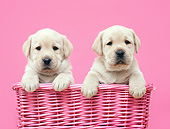PUP 05 XA0004 01