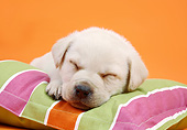 PUP 05 XA0007 01