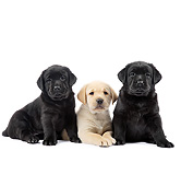 PUP 05 XA0009 01