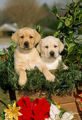 PUP 05 CE0001 01