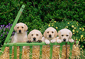 PUP 05 CE0005 01