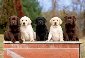 PUP 05 CE0009 01