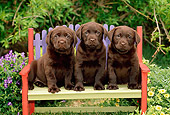 PUP 05 CE0010 01