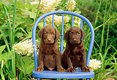 PUP 05 CE0011 01