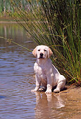 PUP 05 CE0013 01