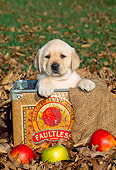 PUP 05 CE0014 01