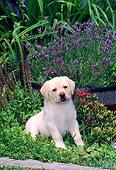 PUP 05 CE0016 01