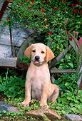 PUP 05 CE0017 01