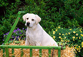 PUP 05 CE0019 01