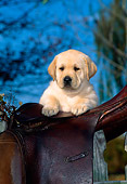PUP 05 CE0020 01