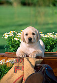 PUP 05 CE0022 01
